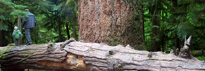 symbolism of the forest in the A list of names in which the meaning contains the keyword forest.